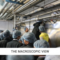 THE MACROSCOPIC VIEW